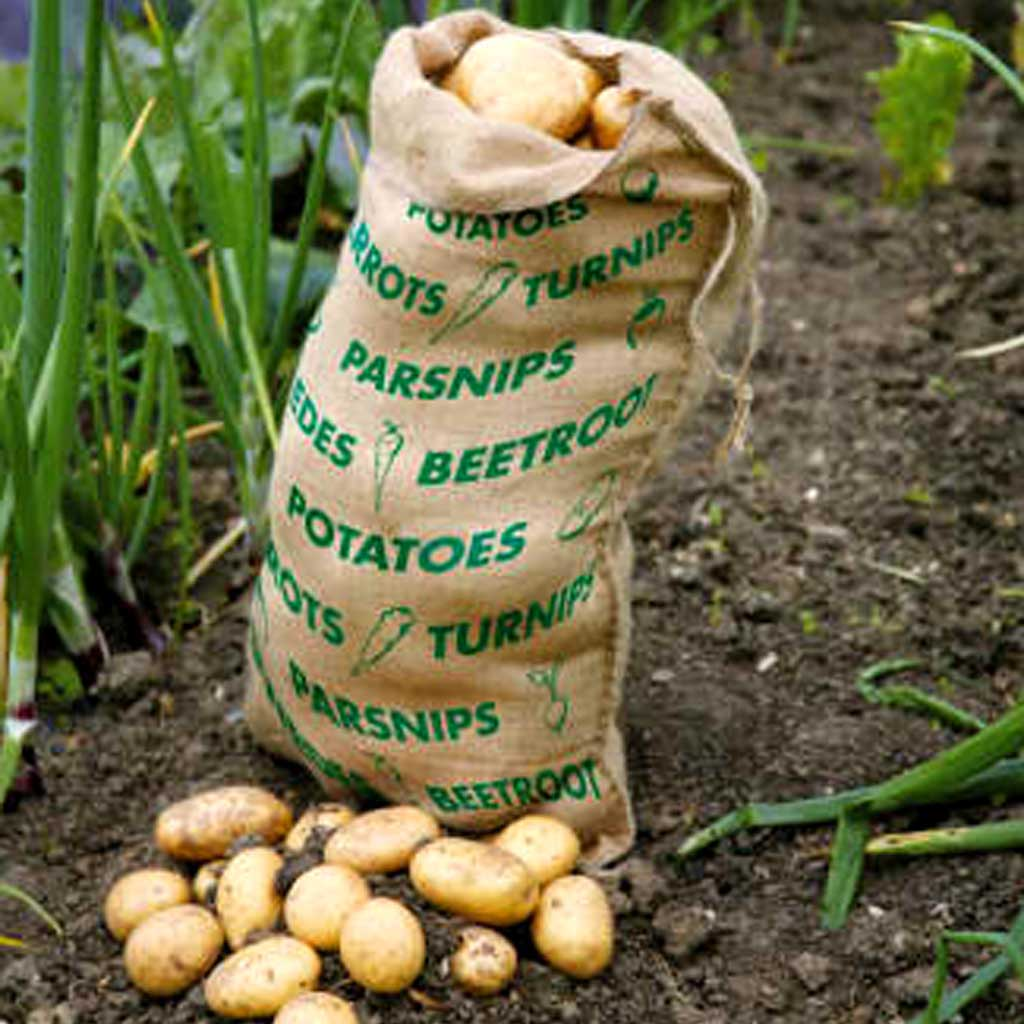 Haxnicks- Vegetable Sack - in use in veg patch with potatoes