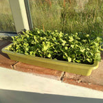 Haxnicks- Bamboo Seed Tray Sage Green - in use growing