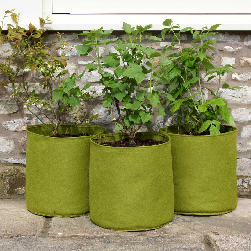 Vigoroot Pots  (3 pack) - Haxnicks
