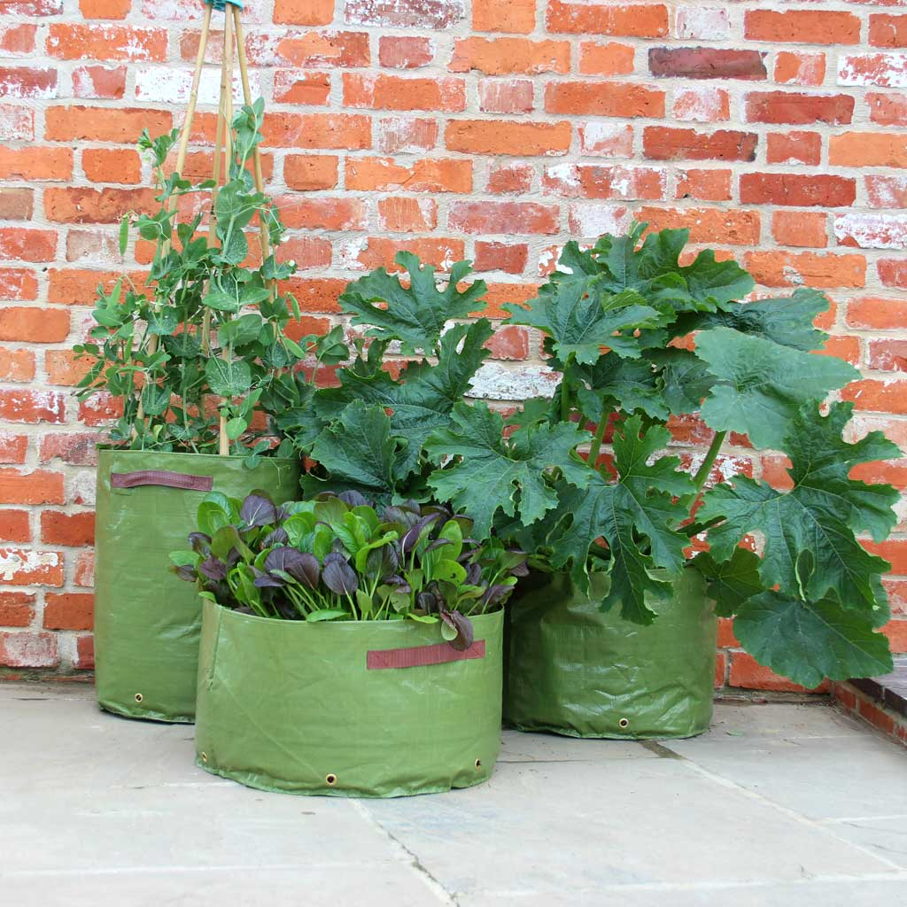 Haxnicks- 3 Vegetable Patio Planters (set of 3) - set of 3 in use on patio