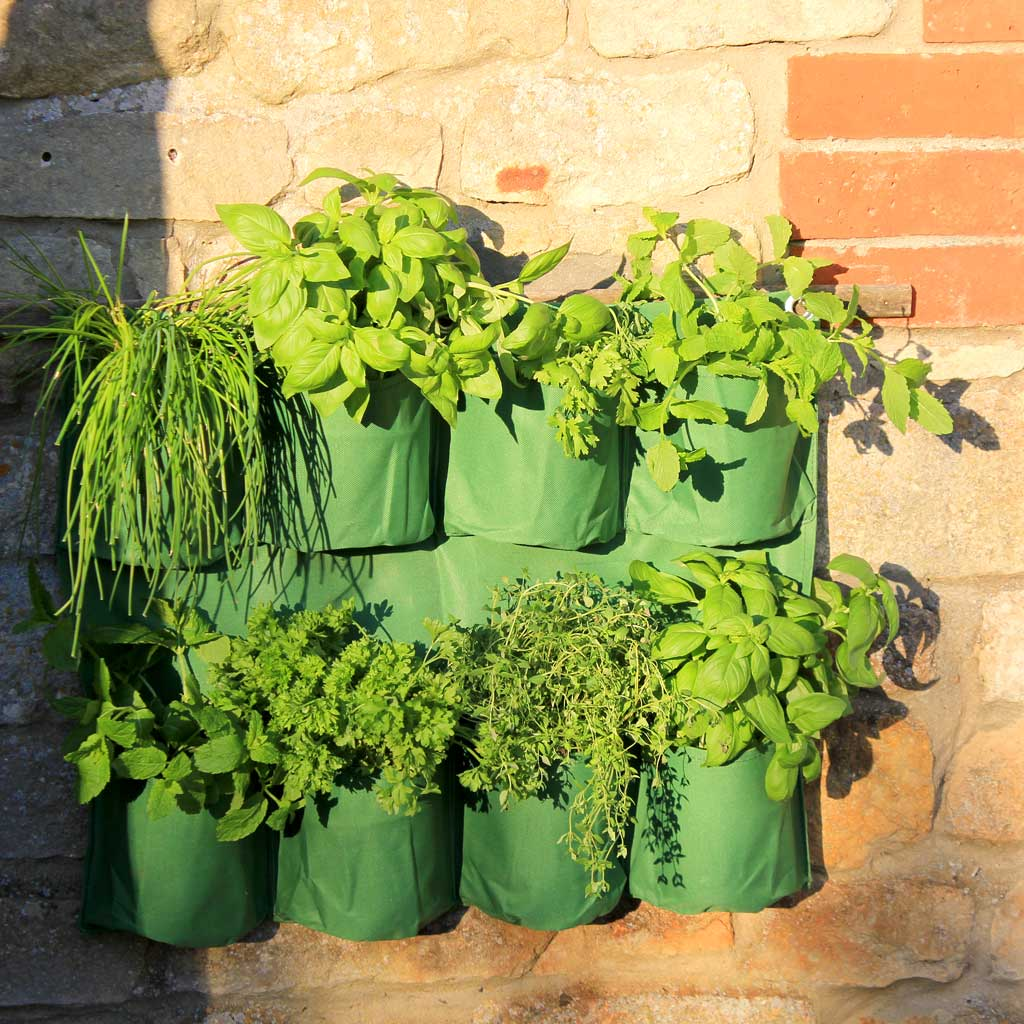 Herb Wall Planter - Haxnicks