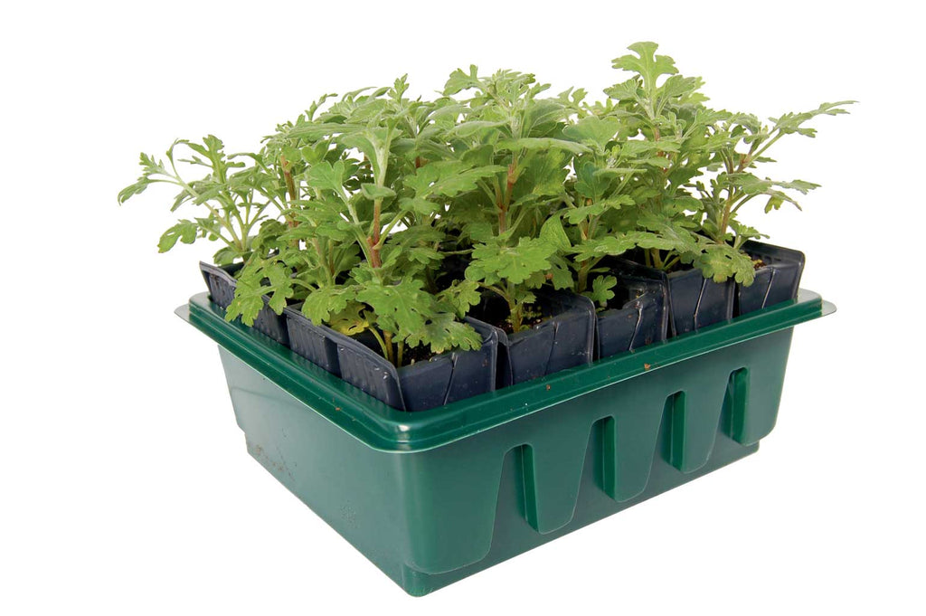 Haxnicks- Compact Rapid Rootrainer - root trainers with plants in studio