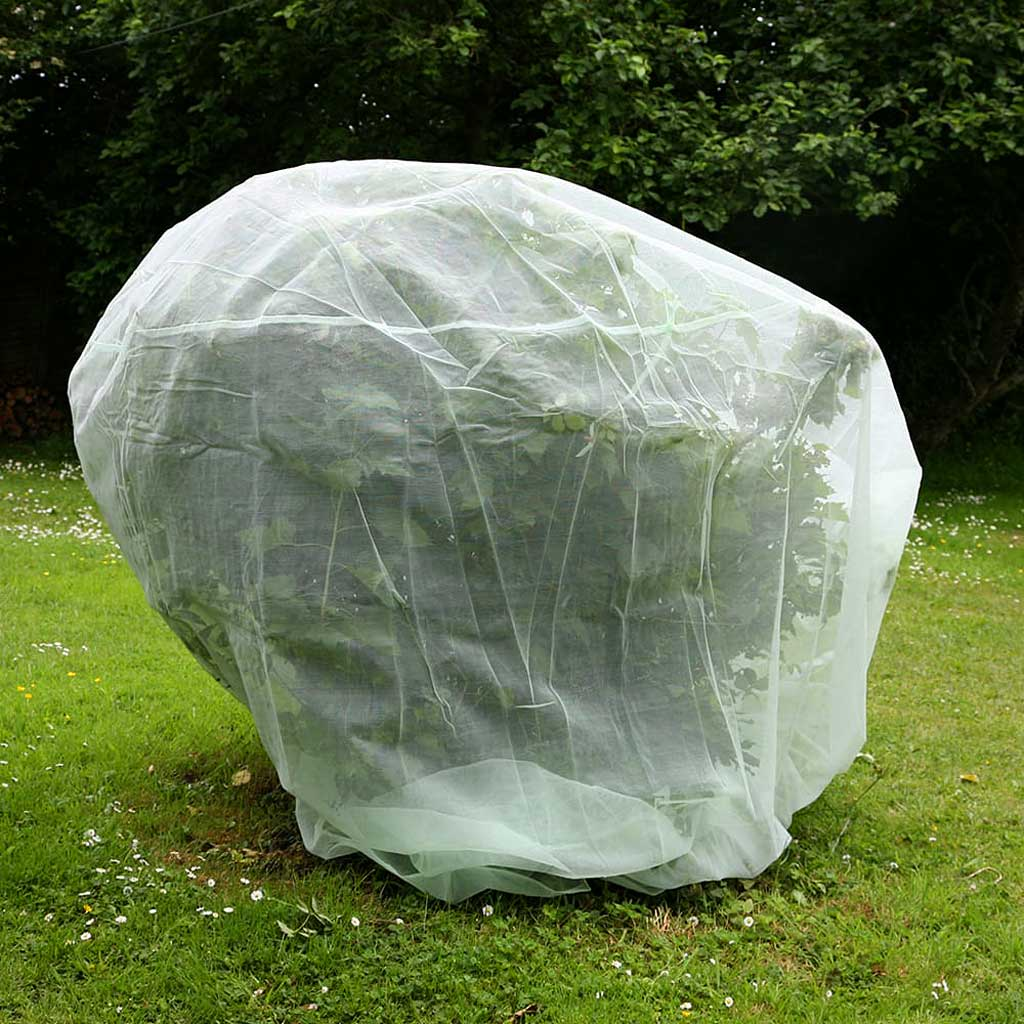 Haxnicks- Fruit Tree Protection Net 2m - in use on bush