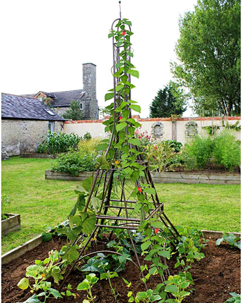 Haxnicks- Eiffel Tower Plant Frame - in use with beans in raised bed