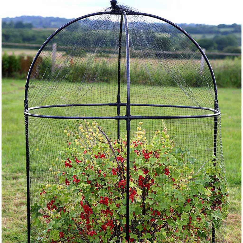 Steel Round Fruit Cage - Haxnicks