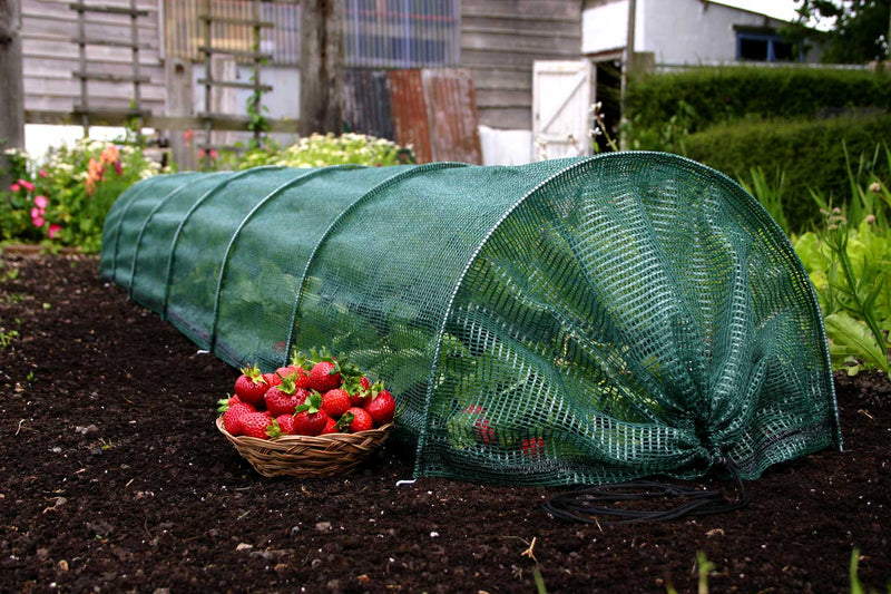 Haxnicks- Easy Net Tunnel - in use growing strawberries