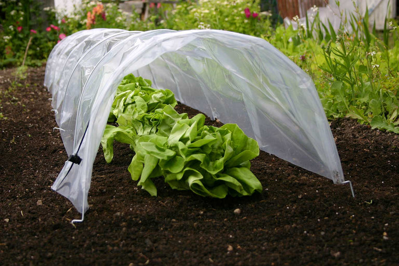 Haxnicks- Easy Poly Tunnel - in use close up growing lettuce
