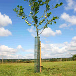 haxnicks- Flexi Mesh Treeguard - in use in field