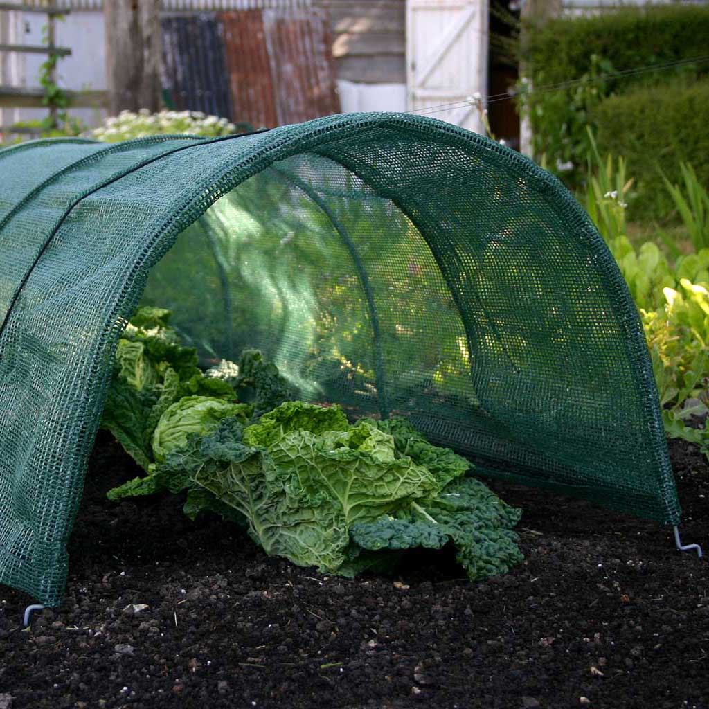 Haxnicks- Giant Easy Net Tunnel - in use growing lettuce