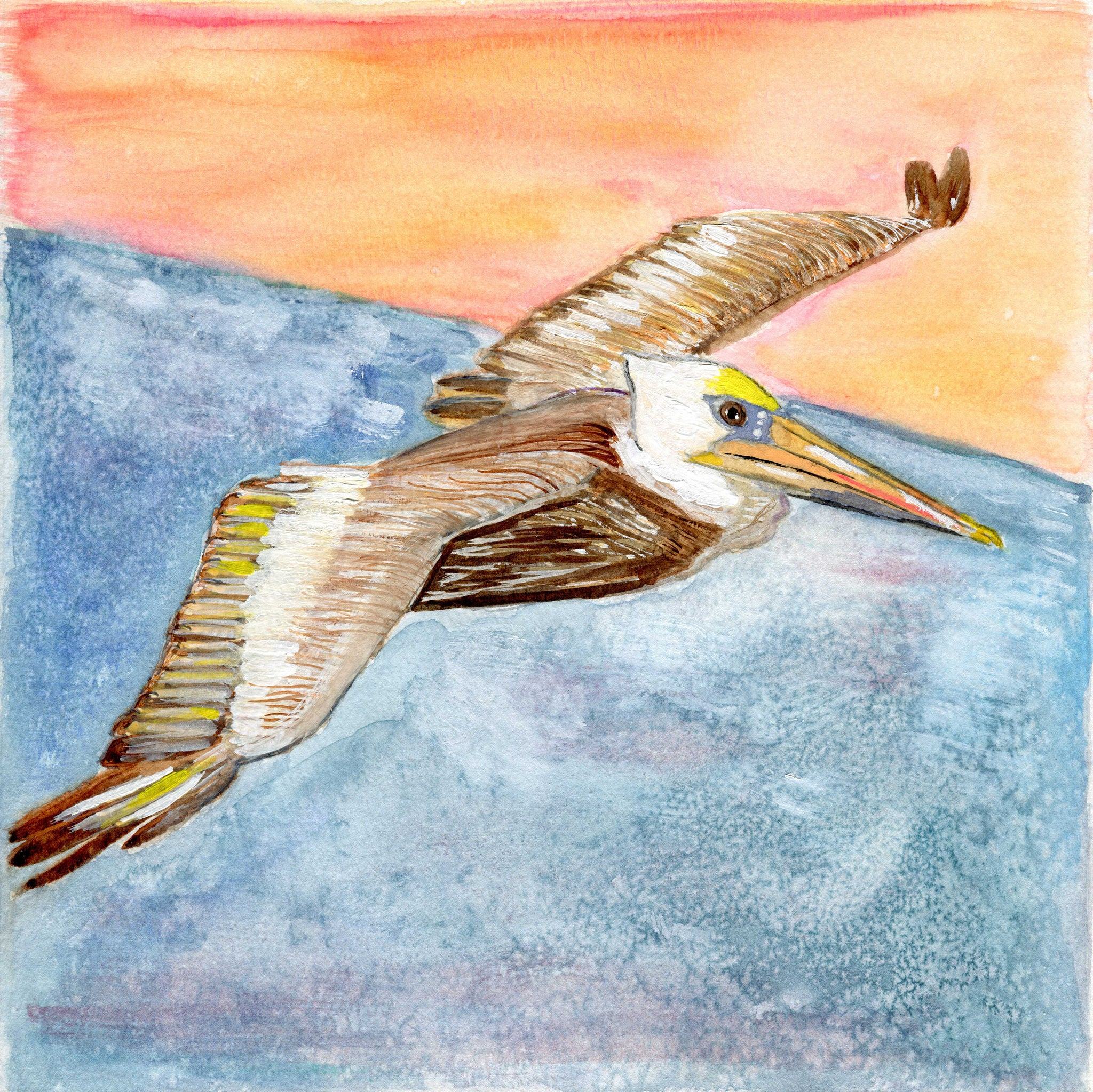 Brown Pelican - Limited Edition Prints