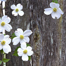 Load image into Gallery viewer, Dogwood Oil