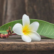 Load image into Gallery viewer, Frangipani Oil