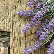 Load image into Gallery viewer, Lavender (French) Essential Oil /Lavanda francesa Esencial