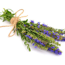 Load image into Gallery viewer, Hyssop Oil