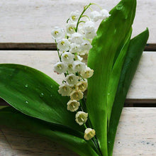 Load image into Gallery viewer, Lily Of The Valley Oil
