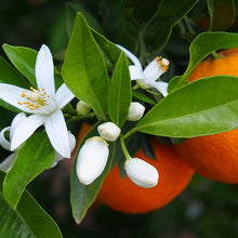 Load image into Gallery viewer, Orange Blossom Oil