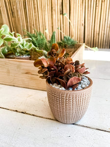 Mini Succulent/Cacti Gift Box