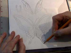 tracing butterfly lines