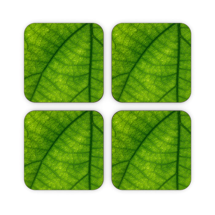 Coasters - Green Leaf - printonitshop