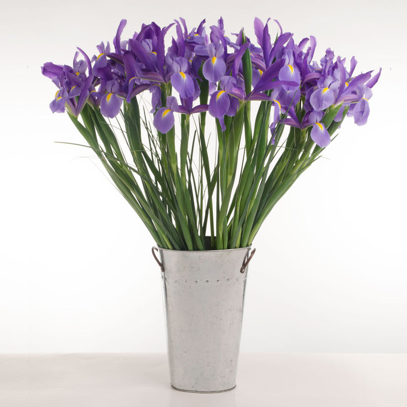 Our Telstar Iris make for an everyday bouquet of deep blue blooming Iris.