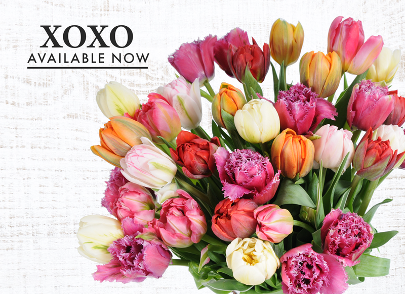 xoxo bouquet. A gorgeous bouquet made up of fancy, frill filled tulips in shades of pink, whites, and purple.