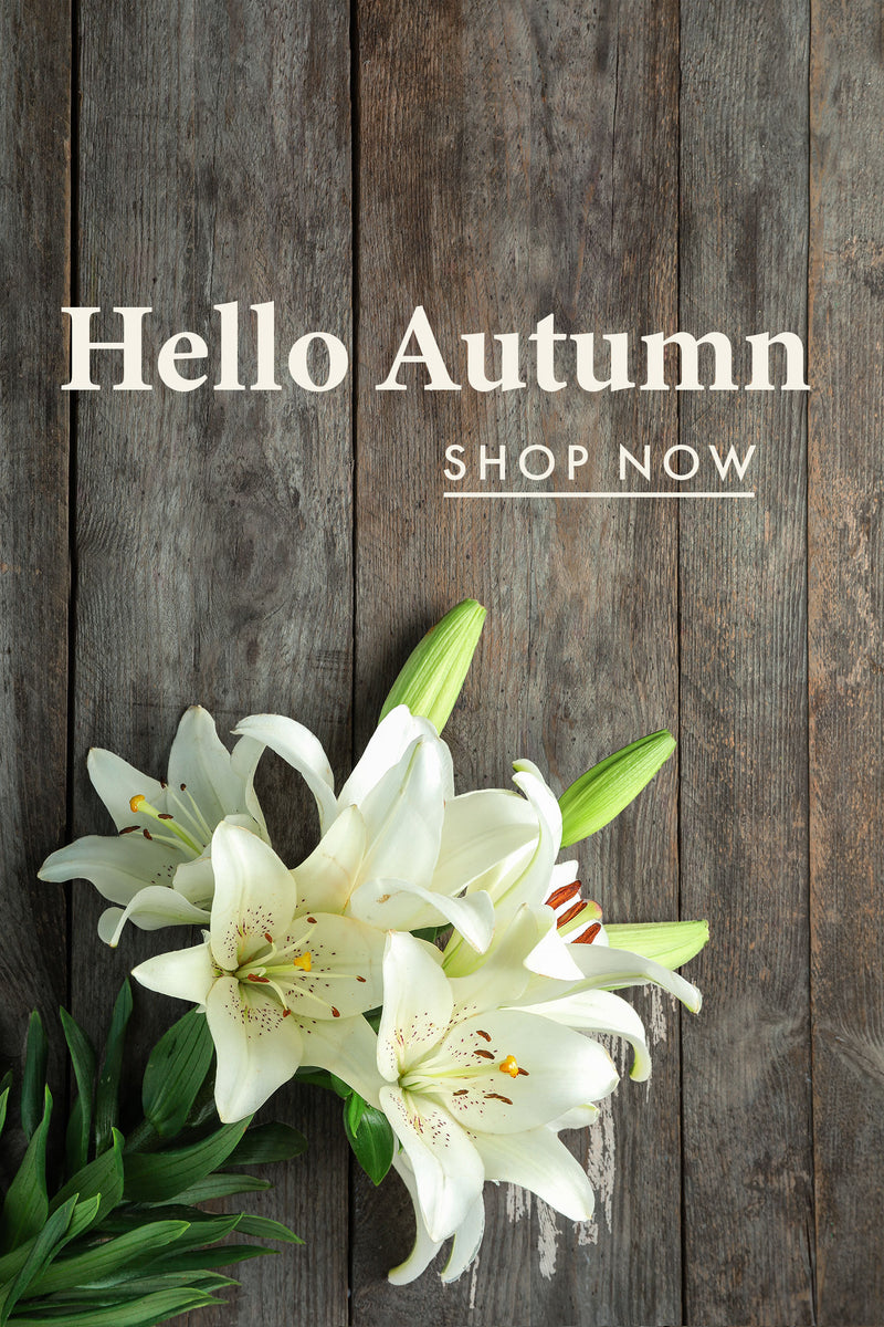 Our Autumn collection is filled with an articulated bouquets of stunnning fall inspired bouquets that make for an ideal gift for family and friends or just to treat yourself.