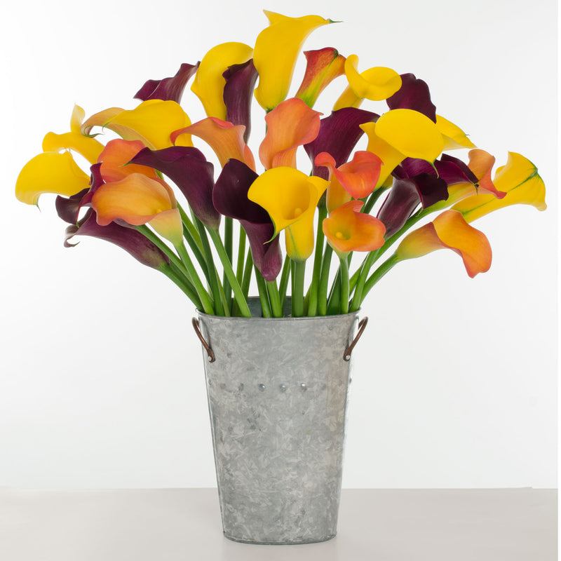 Calla Lilies make for an elegant but sophisticated bouquet of vibrantly colored bell shaped flowers.