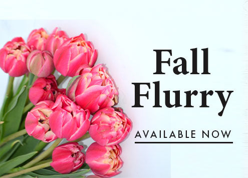 Fall flurry, Beautiful pink toned Tulips with all the frills. One of a kind bouquet for the fall Tulip season. Freshy picked for order, shipped directly to your door.