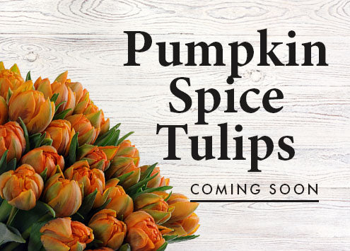 Pumpkin Spice Tulips - Limited Edition bouquet of vibrantly orange fancy Tulips are back for a limited time.