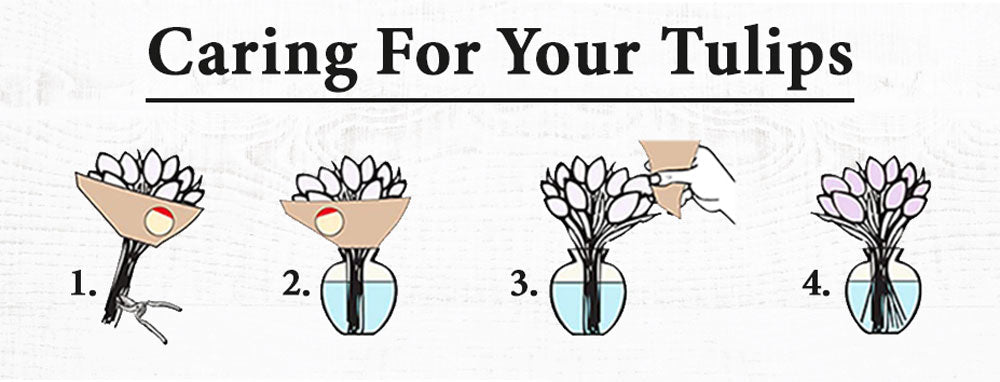 Caring for tulips