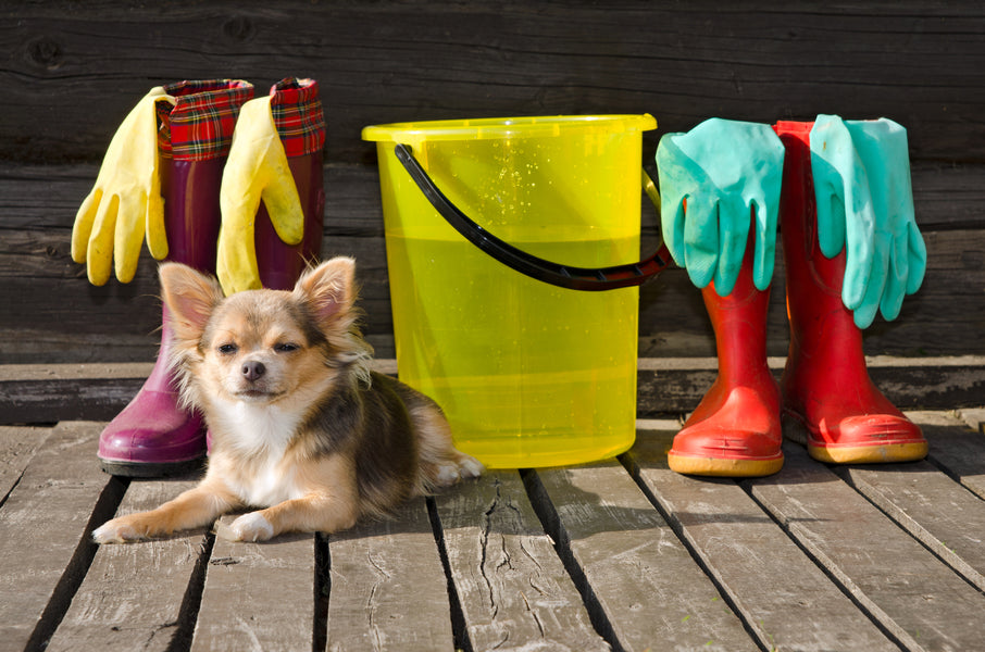 How House Cleaning Products Harm Your Dog And What To Use Instead