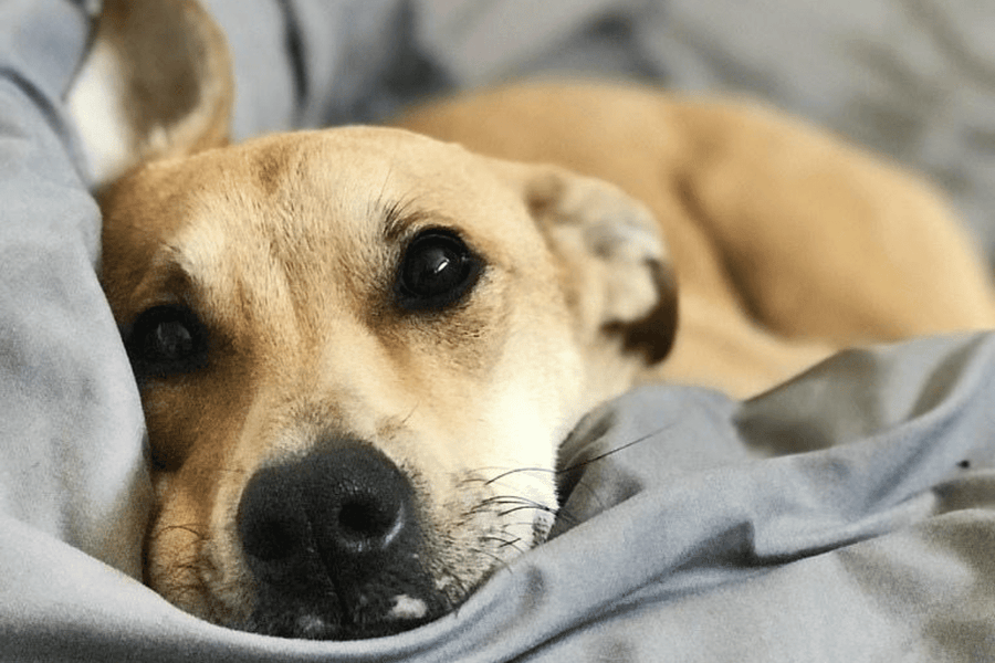 Do You Allow Your Dog In Your Bed? If So Read This!