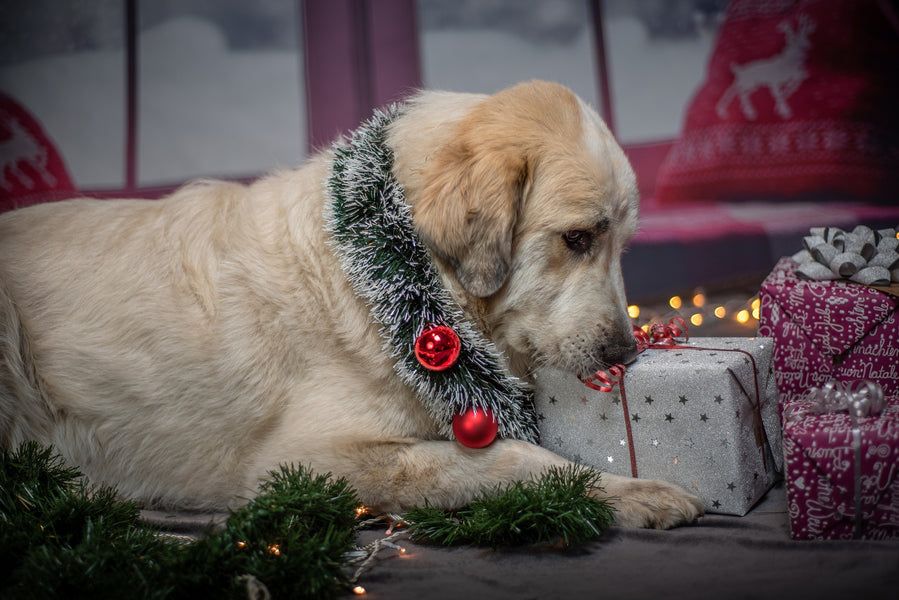 Canine Health & Wellness Gift Guide