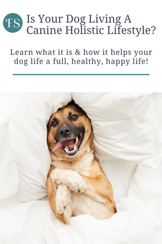 Is your dog living a canine holistic lifestyle? Learn what it is, how to create one for your dog, and how it can help your dog thrive!