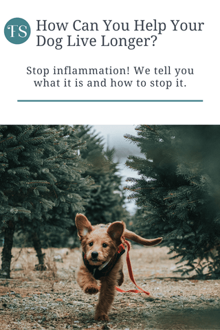 Want to learn how to help your dog live longer? If so, you need to stop inflammation - we tell you how!