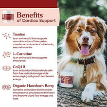 Load image into Gallery viewer, Fera Pet Organics Cardiac Support Cat and Dog Supplement