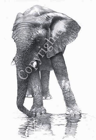 Elephant Blank Greeting Card