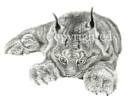 Lynx in the Snow Blank Greeting Card