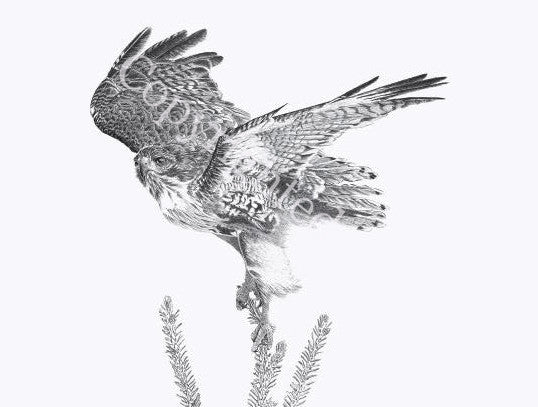 Red Tailed Hawk Blank Greeting Card