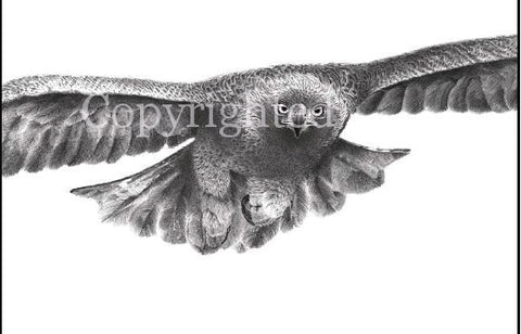 Golden Eagle in Flight Blank Greeting Card