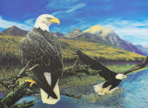 Eagles and Birds