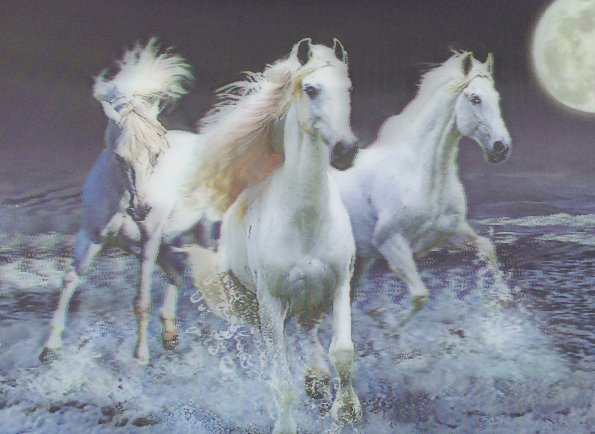 3 White Living Room Ideas: Horses 3D Pictures...FREE SHIPPING!