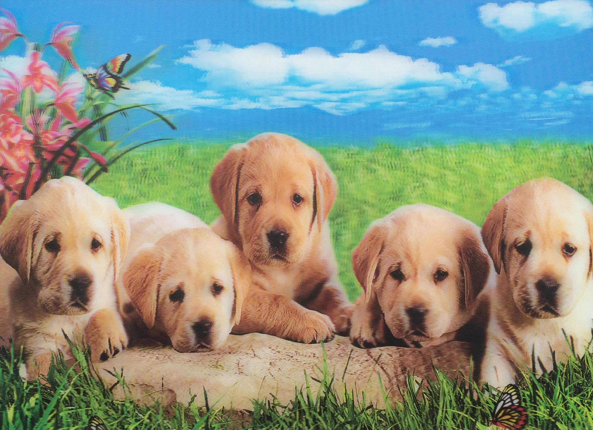 Dc 20 Dogs 5 Lab Puppies 3d Picture 3dddpicturescom