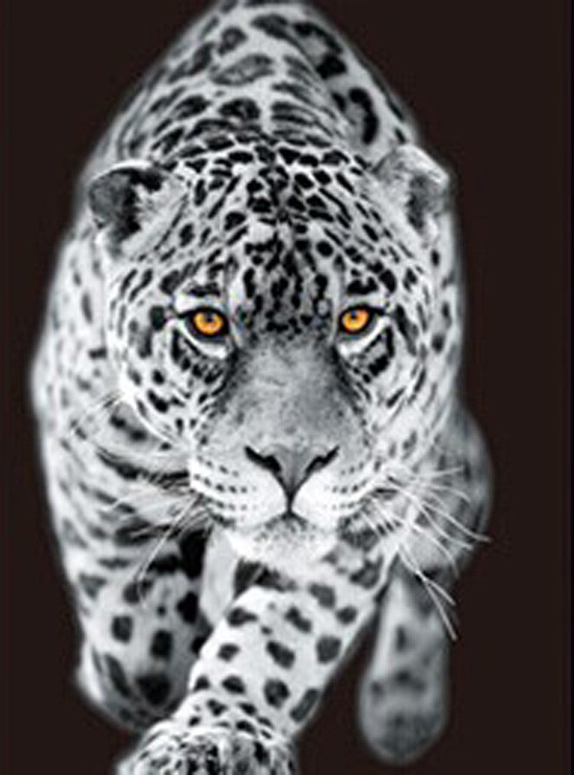 Tigers Lions Leopards 3d Pictures Free Shipping 3dddpictures Com