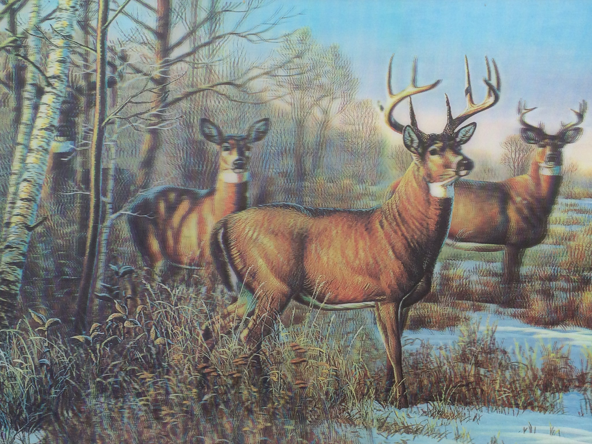 D 7 Deer Big Buck 3d Picture 3dddpictures Com