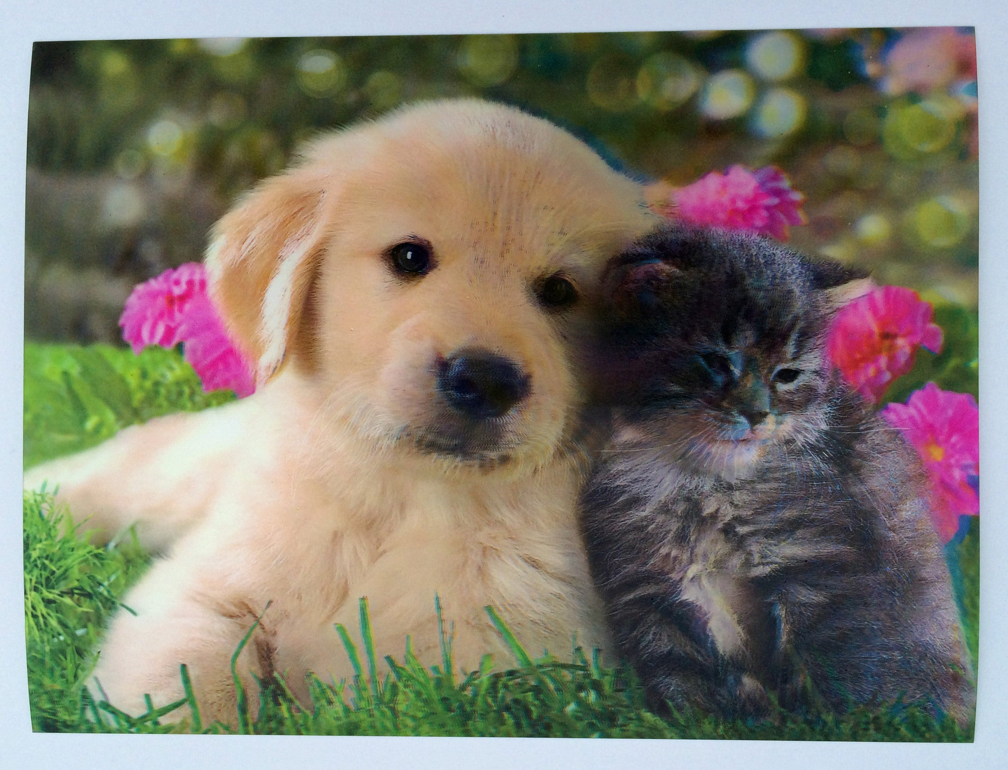 DC-16 Puppy and Kitten 1 3D Picture | 3DDDpictures.com