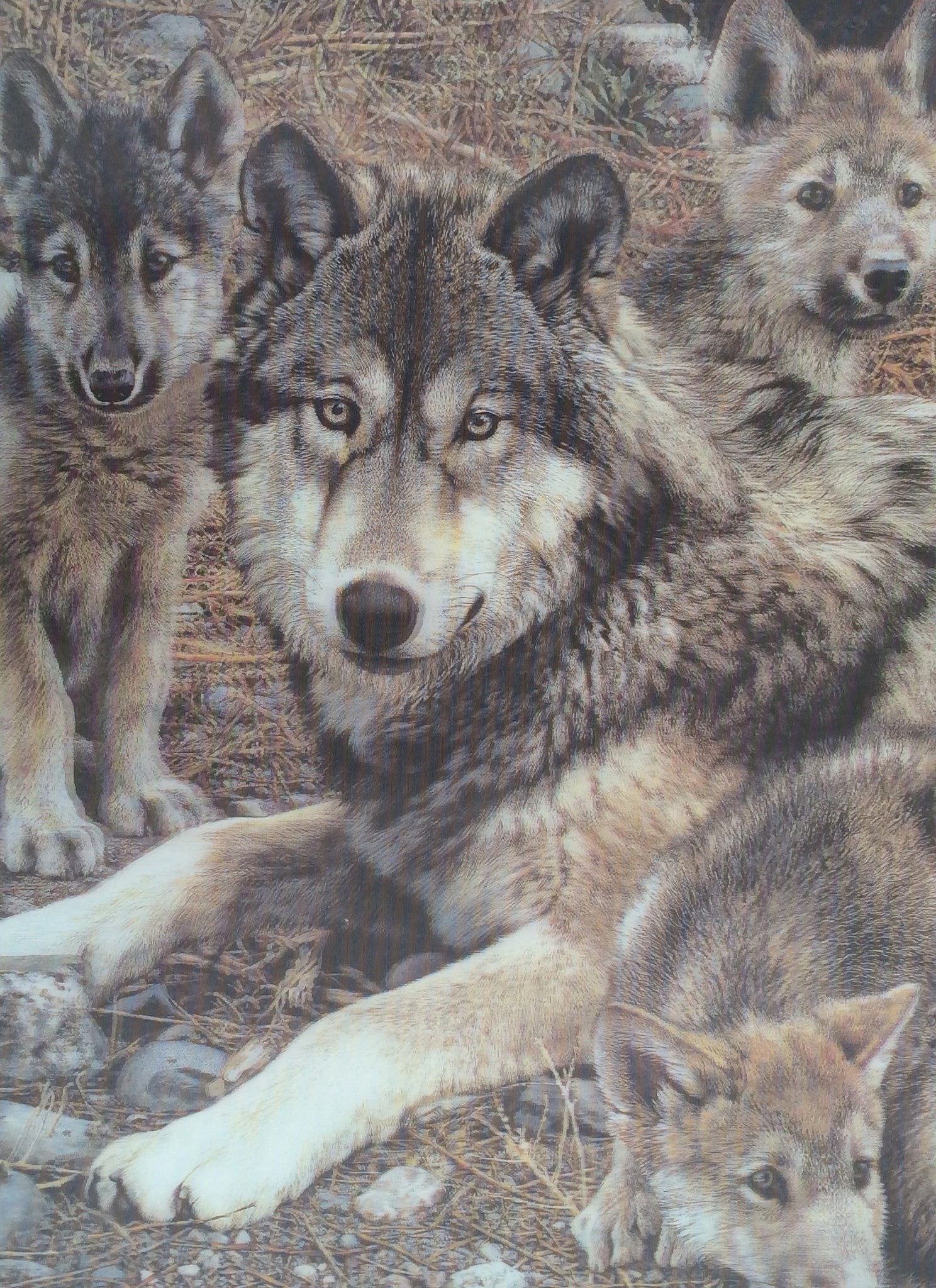 wolf pups mother wolves 3d moon face pup faces 3dddpictures den leaping momma