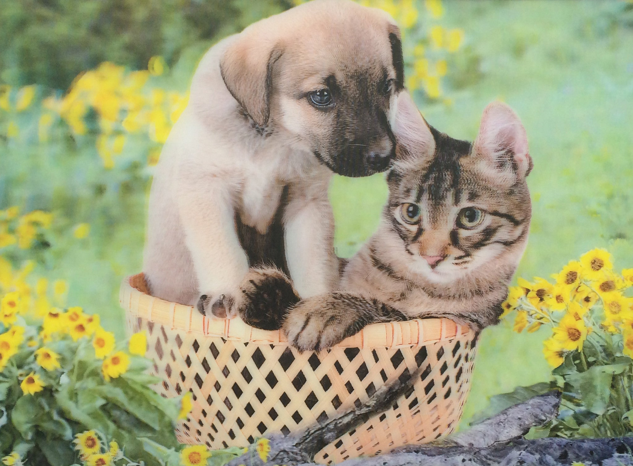 DC 18 Puppy And Kitten In Basket 3D