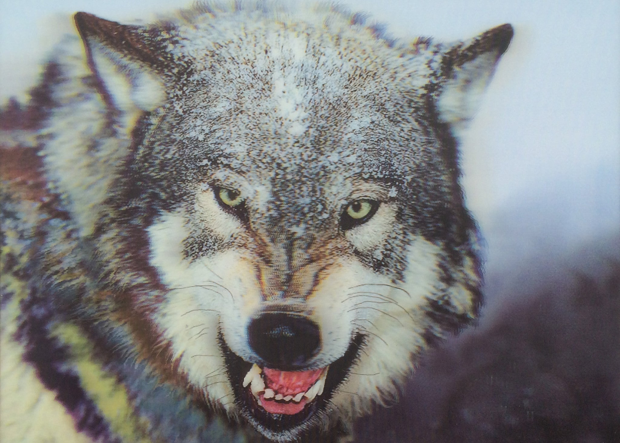 W-19 Wolf Snarling 3D Picture