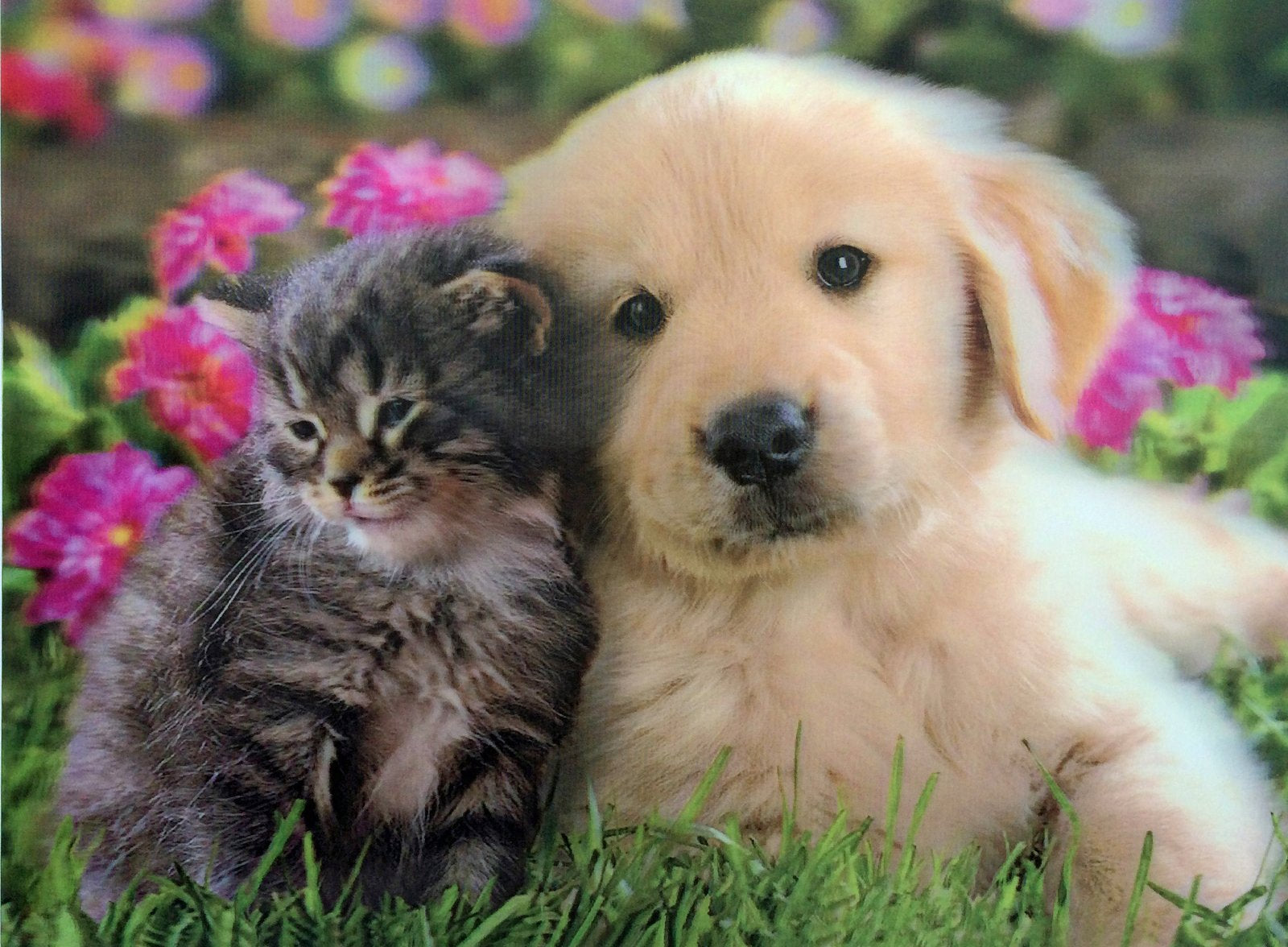 puppy and kitten 3d picture free shipping